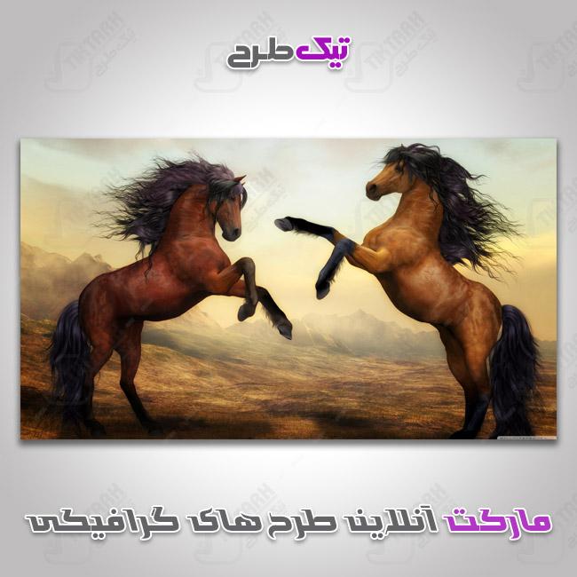 دانلود عکس با کیفیت اسب های قهوه ای