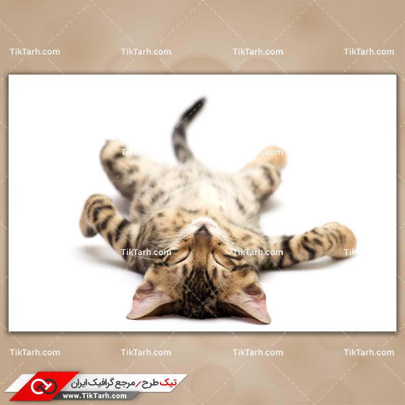 دانلود تصویر با کیفیت گربه خوابیده