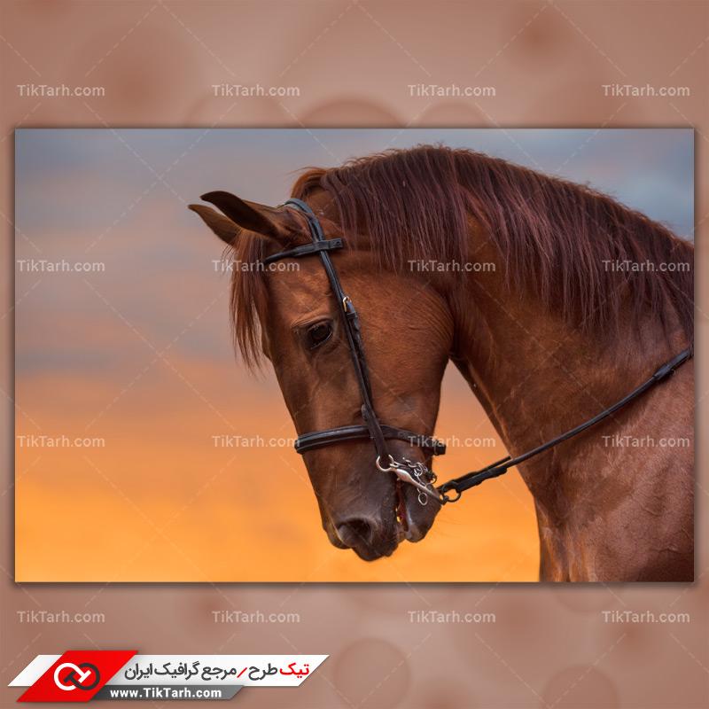 دانلود تصویر با کیفیت اسب قهوه ای