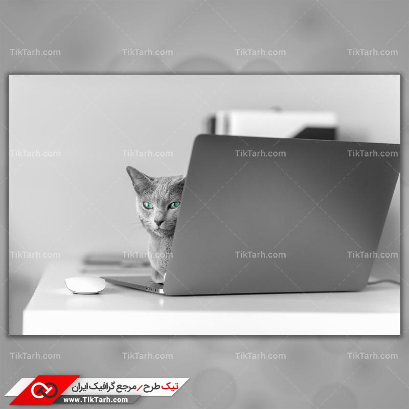دانلود تصویر با کیفیت گربه پشت لپ تاب