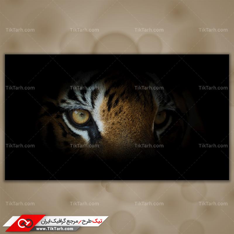 دانلود تصویر با کیفیت چشمهای ببر
