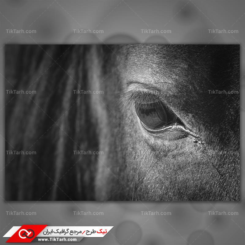 دانلود تصویر با کیفیت چشم اسب