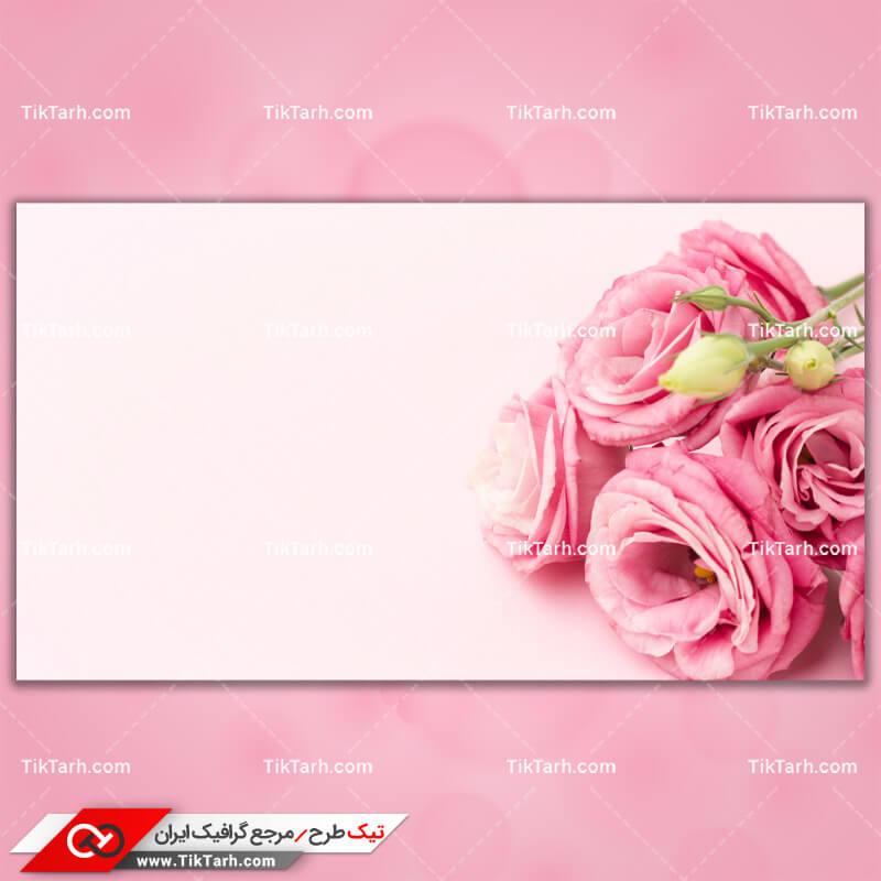 دانلود تصویر با کیفیت گلهای رز صورتی