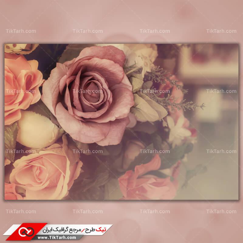 دانلود تصویر با کیفیت گلهای رز از نمای نزدیک