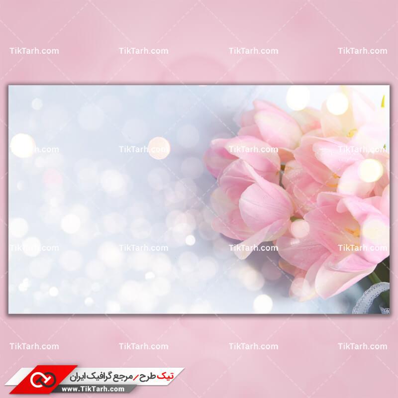 دانلود تصویر با کیفیت گل با گلبرگهای صورتی کم رنگ