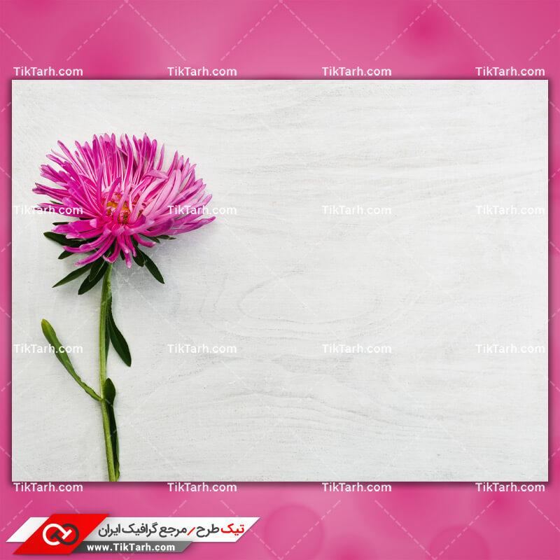 دانلود تصویر با کیفیت شاخه گل مینای صورتی