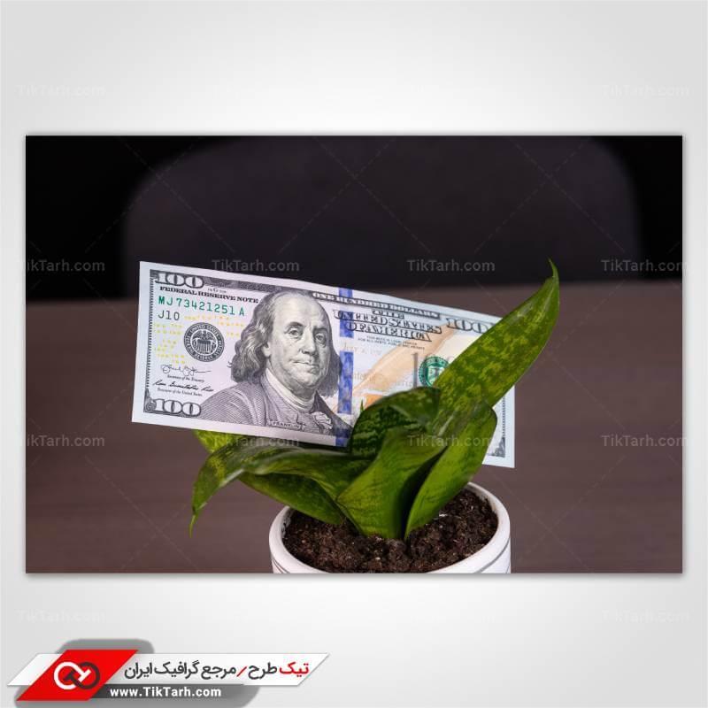 عکس با کیفیت اسکناس صد دلاری و گلدان