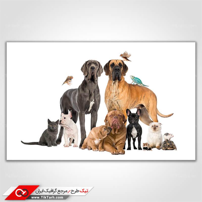تصویر با کیفیت انواع حیوانات