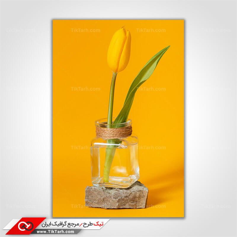 تصویر با کیفیت شاخه گل لاله زرد