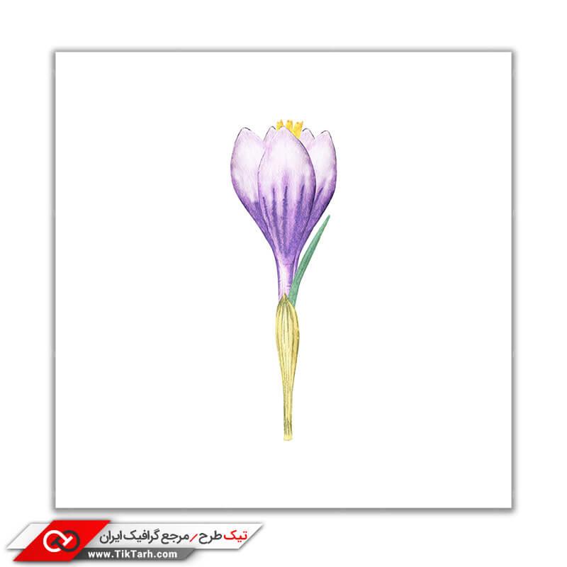 تصویر باکیفیت نقاشی گل زعفران