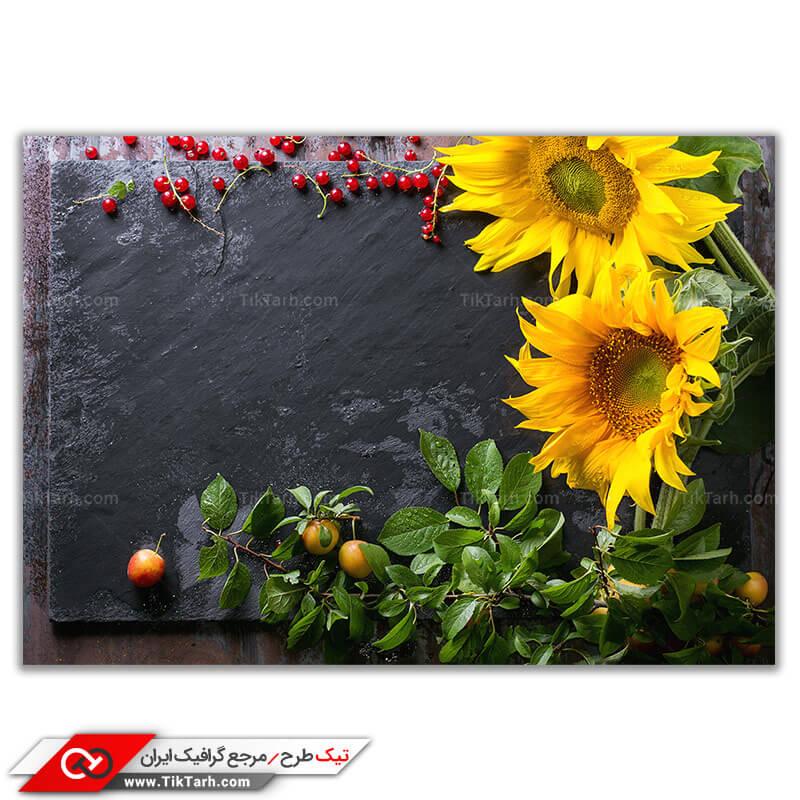 دانلود تصویر لارج فرمت گل آفتابگردان