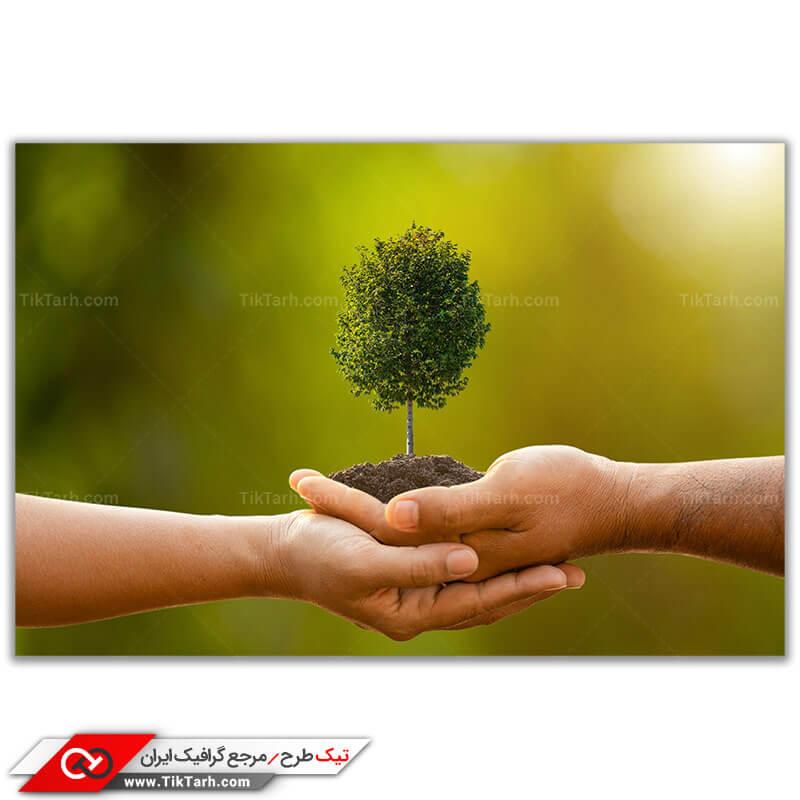 عکس باکیفیت درخت کوچک فانتزی