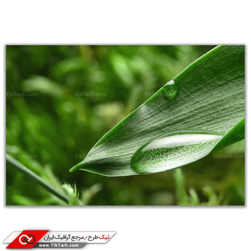 تصویر باکیفیت شبنم روی برگ گیاه