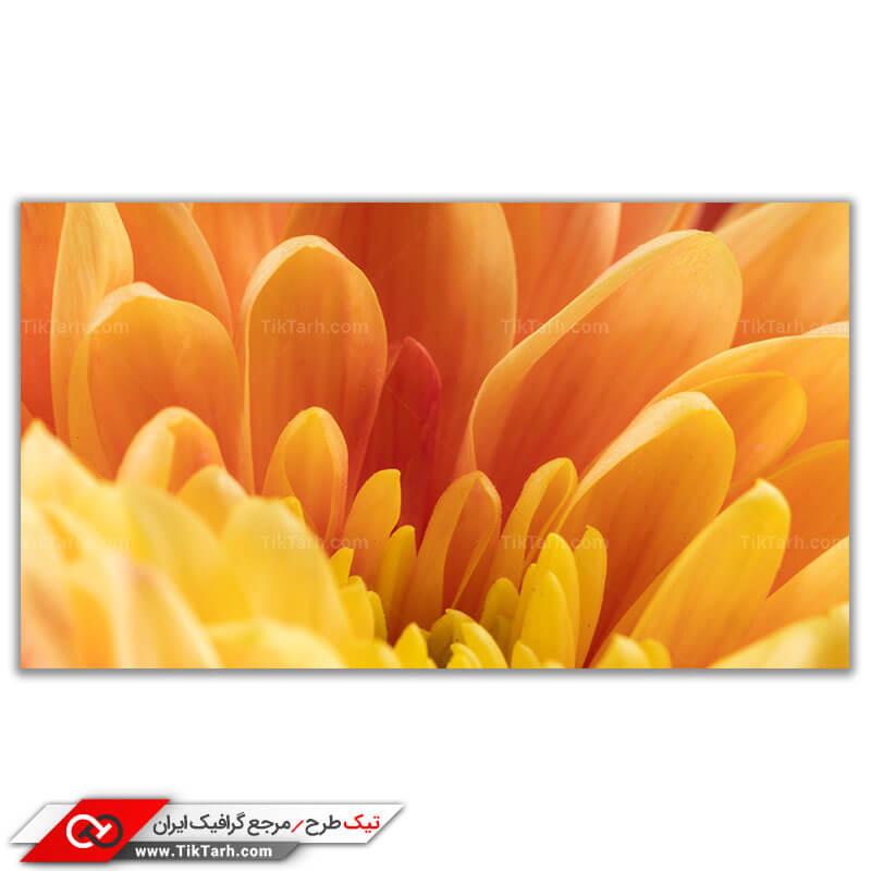 تصویر باکیفیت از گلبرگ های گل