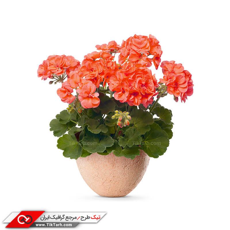 دانلود طرح گلدان گل
