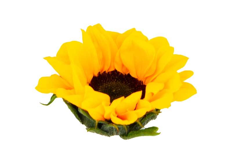 طرح باکیفیت گرافیکی گل آفتابگردان