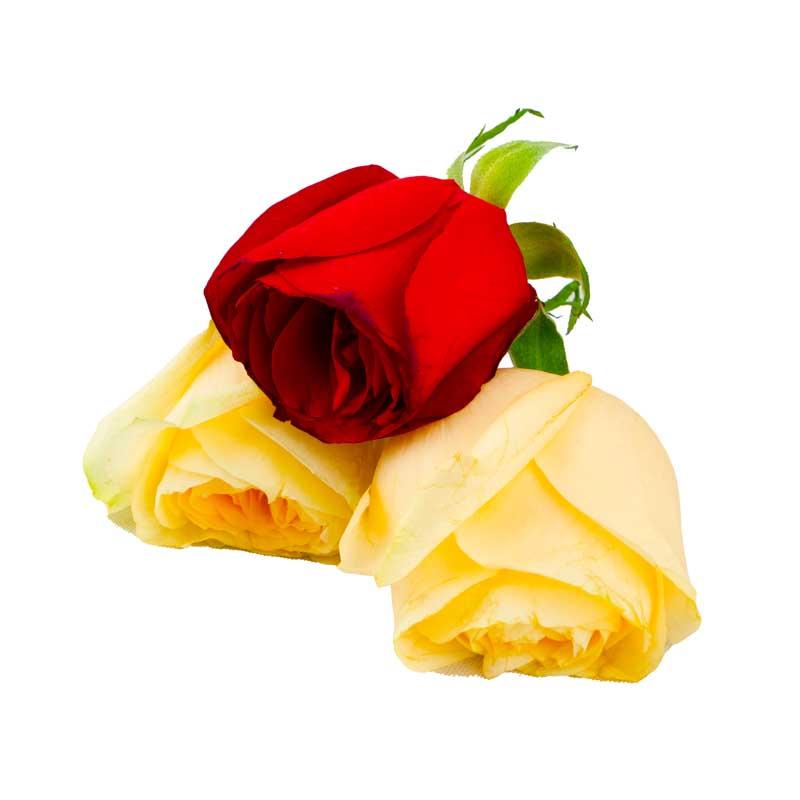 دانلود طرح گل های رز قرمز و زرد