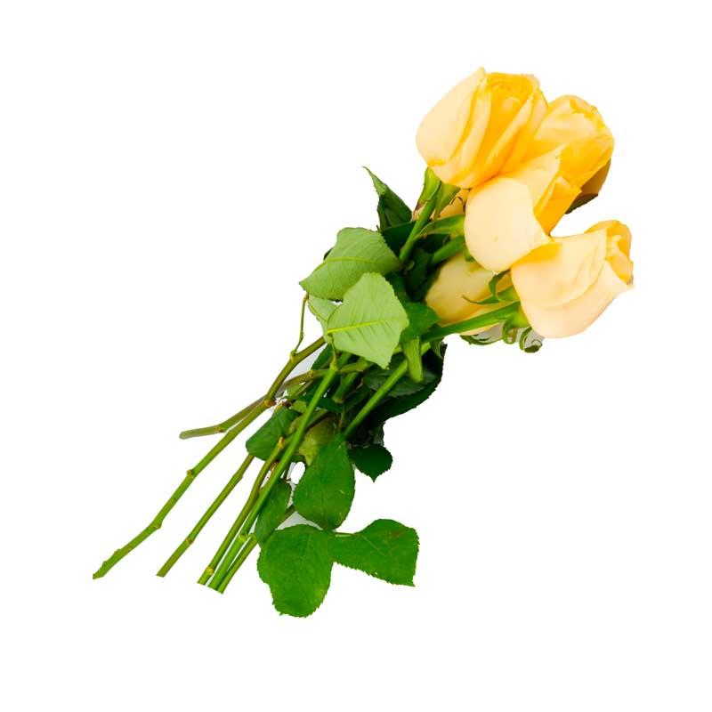 دانلود طرح باکیفیت دسته گل رز زرد