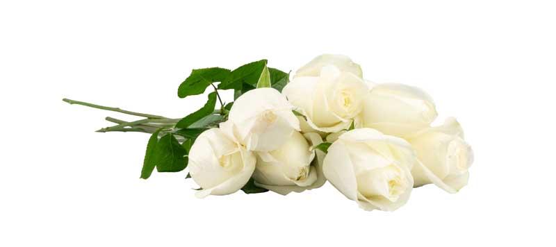 دانلود طرح دسته گل رز سفید