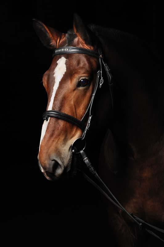 تصویر باکیفیت اسب قهوه ای