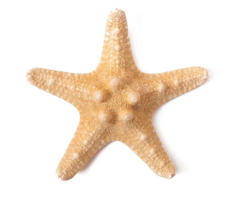 تصویر باکیفیت ستاره دریایی