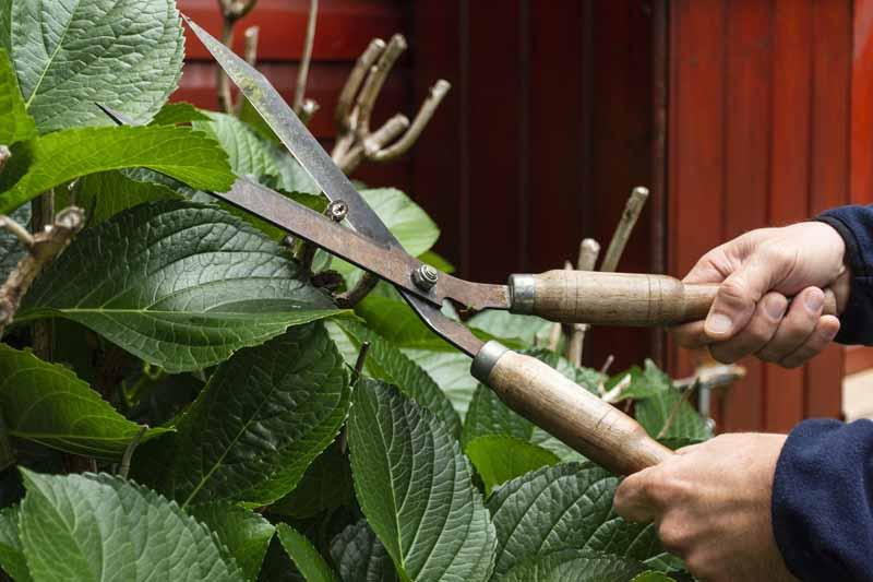 تصویر باکیفیت گل و باغبانی
