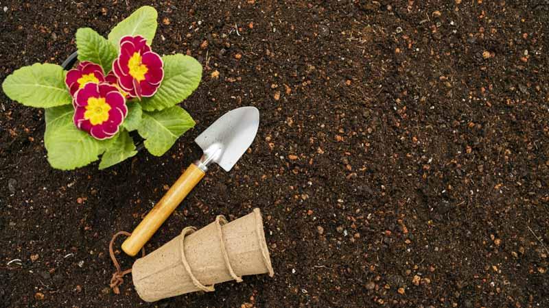 تصویر باکیفیت از گل و لوازم گل کاری