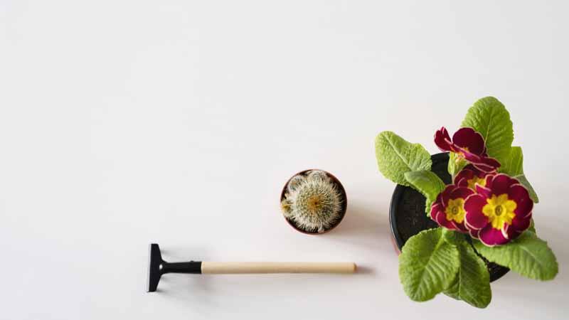 عکس باکیفیت از گل و لوازم گل کاری