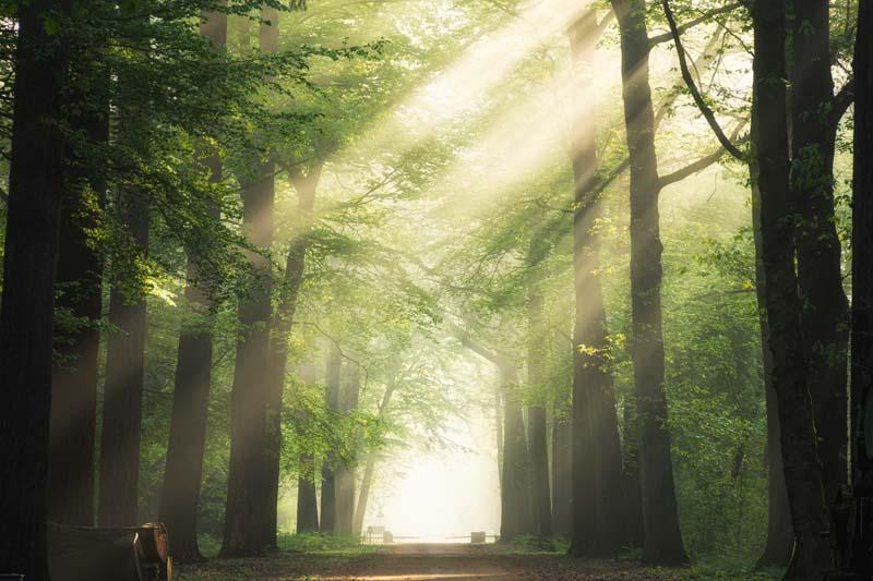 تصویر باکیفیت نور خورشید از میان درختان