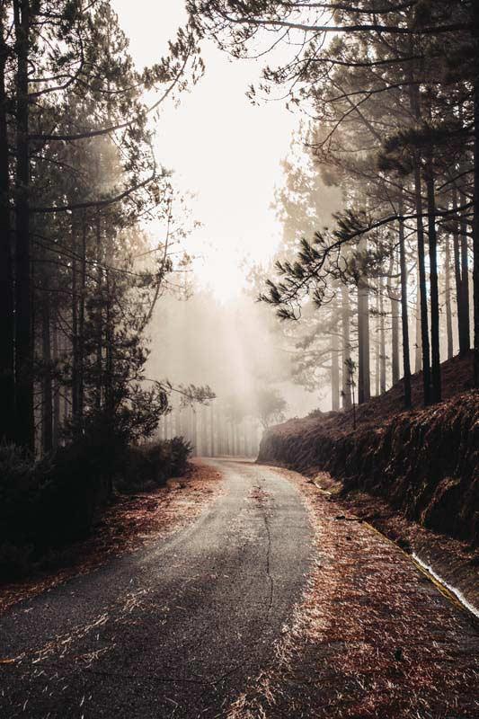 تصویر باکیفیت جاده باریک در میان جنگل