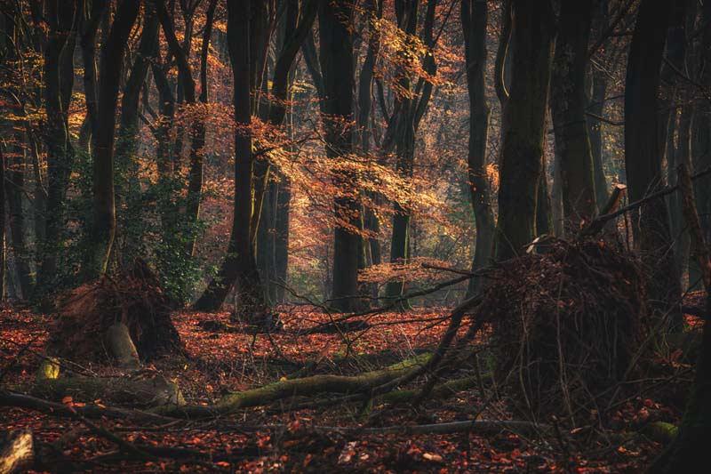 تصویر باکیفیت از جنگل و برگ های زرد پاییزی