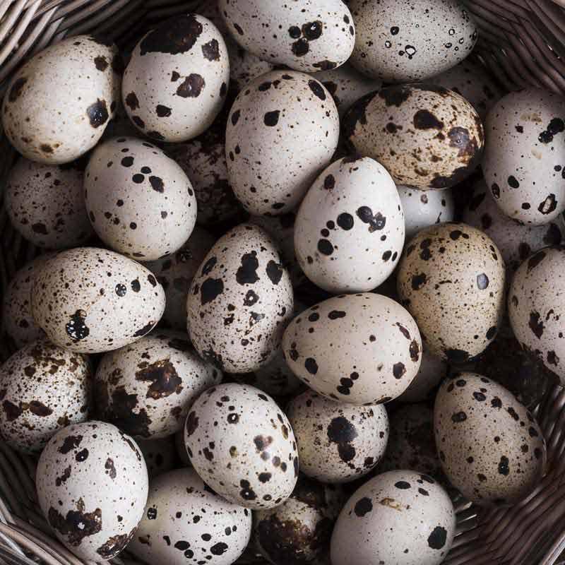 دانلود عکس با کیفیت تخم های بلدرجین در سبد