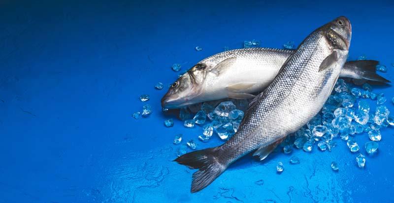 تصویر با کیفیت از ماهی ها در یخ