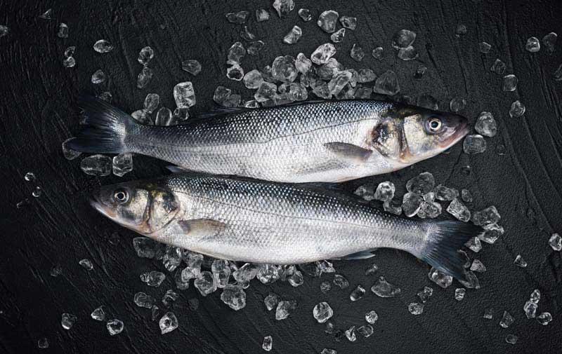 دانلود تصویر با کیفیت از ماهی ها در یخ