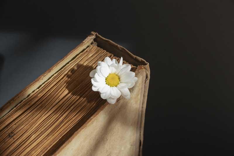 تصویر کتاب و گل