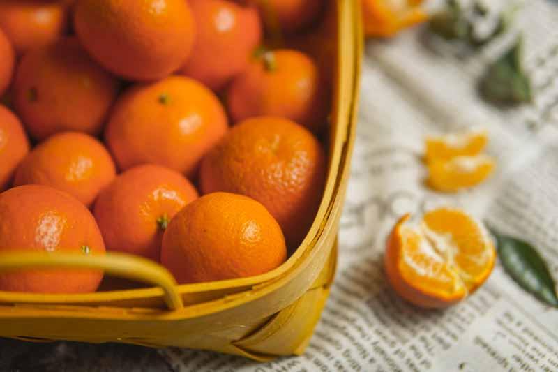 تصویر باکیفیت نارنگی های تازه