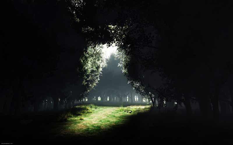 عکس لارج فرمت از جنگل سرپوشیده از برگ درختان