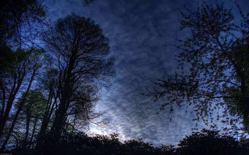 تصویر باکیفیت ابرهای پاره پاره روی آسمان جنگل