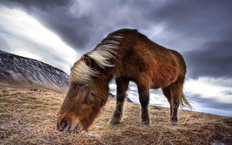 دانلود تصویر کره اسب قهوه ای
