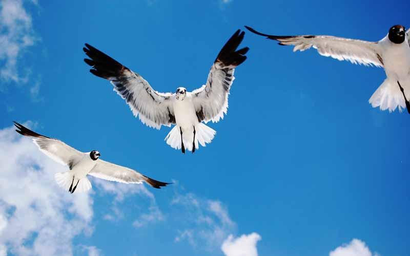 دانلود تصویر پرواز مرغان دریایی