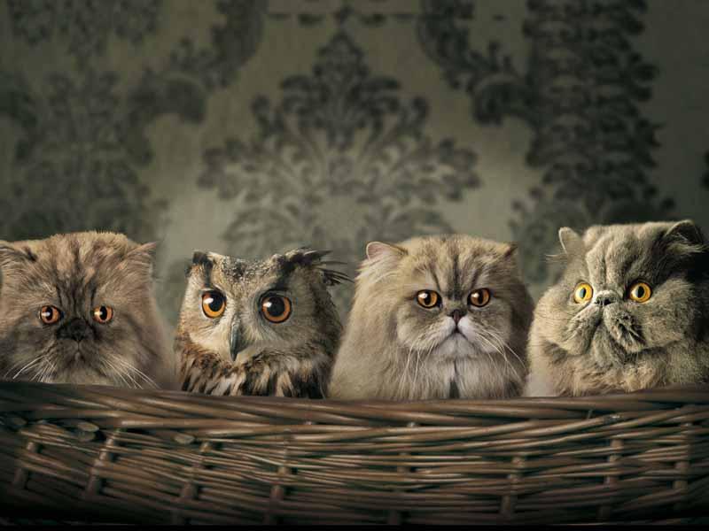 دانلود تصویر گربه و جغد