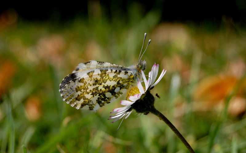 دانلود تصویر با کیفیت پروانه روی گل